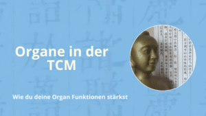 Organ Funktionen in der TCM